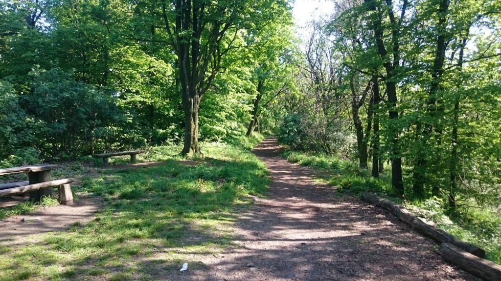 biegnasleze-trasa-2017-22