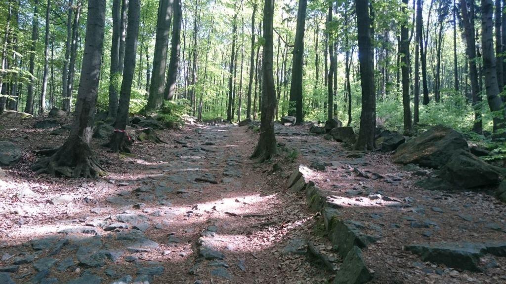 biegnasleze-trasa-2017-29